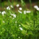 Crescita di fiori selvaggi in una foresta Fotografia Stock