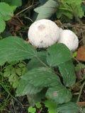 Crescita di fungo fotografie stock