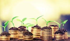 Crescita di investimento immagini stock