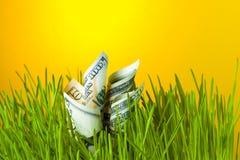 Crescita di investimento: banconote in dollari in erba verde Immagini Stock