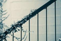Crescita di pianta verde dell'edera al corrimano d'annata Architettonico all'aperto fotografia stock libera da diritti