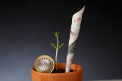 Crescita di soldi Immagini Stock