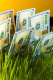Crescita di soldi: banconote in dollari in erba verde Fotografia Stock Libera da Diritti
