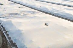 Crescita di verdure nel campo Piccole serre Spunbond nocivo Disastro: tornado, uragano Danno ad agricoltura gelo fotografia stock libera da diritti