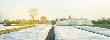 Crescita di verdure Spunbond per proteggere da gelo e per tenere umidit? delle verdure Piccole serre Terreni agricoli immagini stock