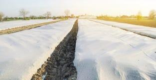 Crescita di verdure Spunbond per proteggere da gelo e per tenere umidit? delle verdure Piccole serre Terreni agricoli immagine stock libera da diritti