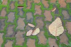Crescita e foglie su pavimentazione Fotografia Stock Libera da Diritti