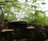 crescita e funghi sulla corteccia, immagine stock libera da diritti