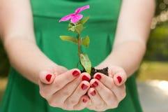 Crescita e sviluppo Fotografie Stock Libere da Diritti