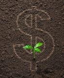 Crescita finanziaria dei soldi di concetto Fotografia Stock