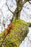 Crescita fresca del ramoscello Fotografie Stock