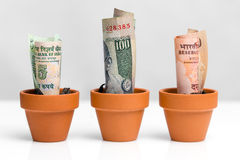 Crescita indiana di concetto dei soldi Fotografie Stock Libere da Diritti
