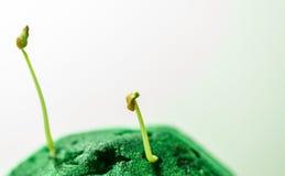 Crescita verde delle piantine Immagini Stock