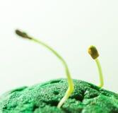 Crescita verde delle piantine Fotografia Stock Libera da Diritti