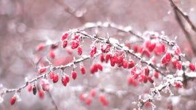 Crespini coperti in neve nell'inverno Immagine Stock Libera da Diritti