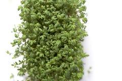 cress świezi ogródu liść Zdjęcie Stock