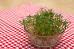 Cress Stock Photography