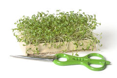 Cress Stock Images