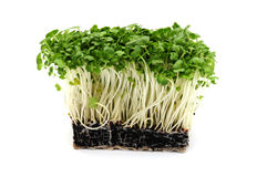 Cress Royalty Free Stock Photography