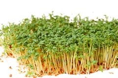 Cress Royalty Free Stock Photo