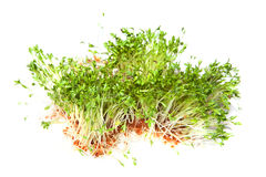 cress flance Obrazy Stock