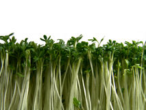 Cress forest stock images