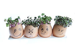 Cress Heads Royalty Free Stock Images