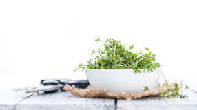 Cress (isolated on white) Stock Photography
