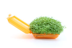 Cress in plastic Royalty Free Stock Image