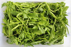 Cress salad Stock Photos
