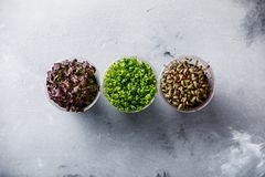 Cress salad different kind Royalty Free Stock Image