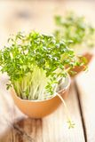 Cress salad in an eggshell Royalty Free Stock Photo