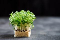 Cress Salad Macro Shot fresco Fotografia Stock