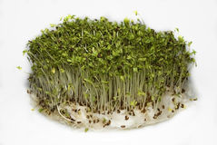 Free Cress Sprouts Royalty Free Stock Photography - 18094057