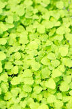 Cress Stock Photos
