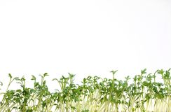 Cress on white Royalty Free Stock Images