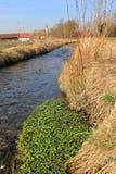 Cresson frais dans un ruisseau image stock