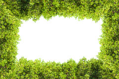 Crest la frontera aislada mangle para el fondo, planta verde Imagen de archivo