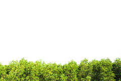 Crest mangrove isolated border for background, Green plant Royalty Free Stock Photos