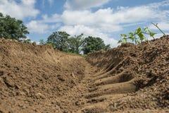 Cresta del suolo del fagiolo secco Fotografie Stock