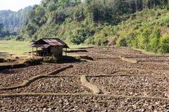 Cresta della risaia, agricoltura tradizionale Fotografia Stock Libera da Diritti