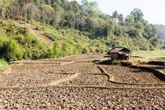Cresta della risaia, agricoltura tradizionale Immagini Stock