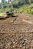 Cresta della risaia, agricoltura tradizionale Immagine Stock