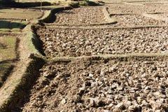 Cresta della risaia, agricoltura tradizionale Fotografie Stock