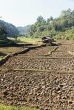 Cresta della risaia, agricoltura tradizionale Immagine Stock Libera da Diritti