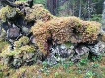 Cresta di legno Immagini Stock