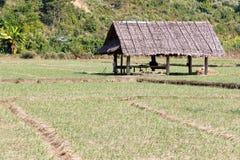Cresta e cottage della risaia Immagini Stock