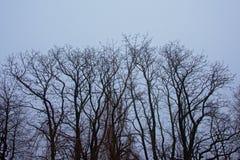Crestas desnudas del árbol del invierno en el cielo gris claro imágenes de archivo libres de regalías
