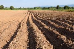 Creste della terra in un giacimento della patata Fotografia Stock Libera da Diritti