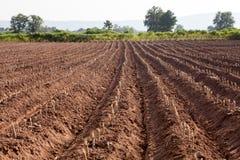 Creste della terra in un giacimento della patata Fotografie Stock